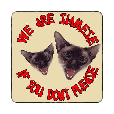 we are siamese if you don't please magnet cats cute random funny