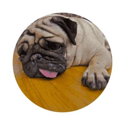 pug far shot sticker