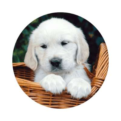 puppy in basket sticker