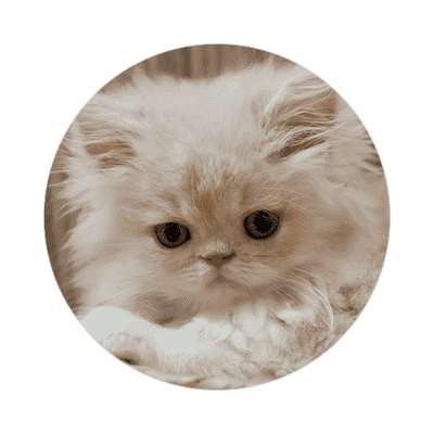 white kitten cute tiny sticker